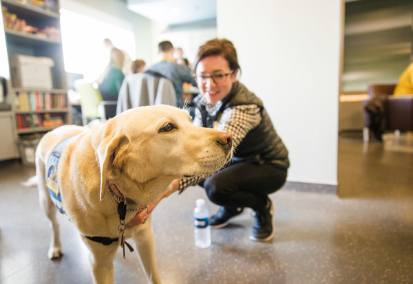 Therapy dog visits with volunteers