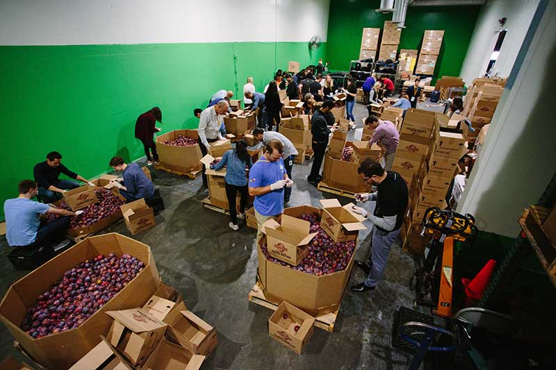Volunteers are caught in action at our Becoming Salesforce volunteer shift sorting and packing plums.