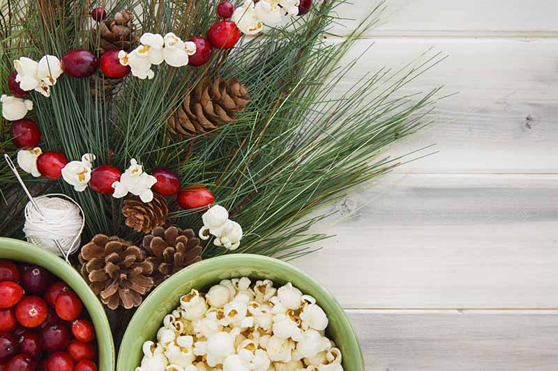 Rustic Christmas Tree Canberry Popcorn Garland String