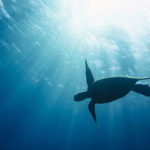 Pro Bono Profile: Tackling Ocean Pollution for World Oceans Day
