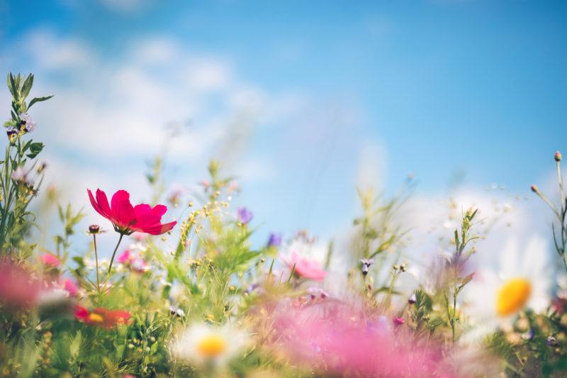 Photo of a spring scene