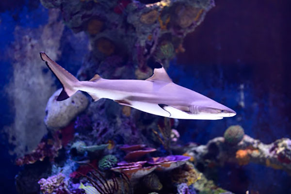 Aquarium live streams bring sealife into your home