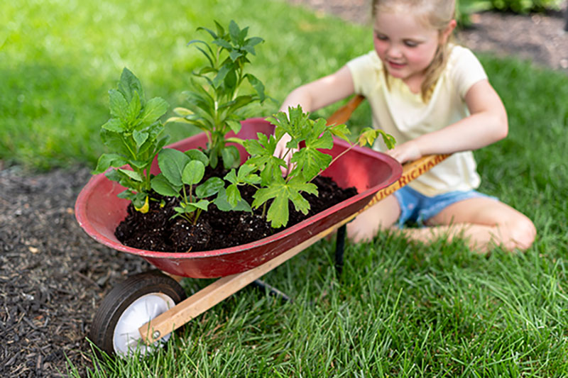 Planting our native plant collections is a great family activity.
